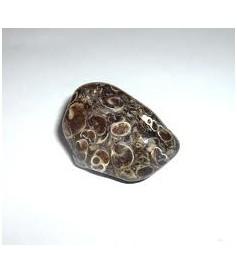 Agate Fossile ou Turitelle